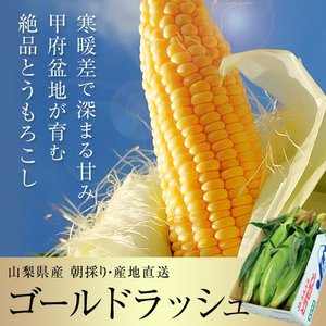 『ゴールドラッシュ』 山梨産 2Lサイズ 2.5kg以上(6本入り)※冷蔵 ○|tsukijiichiba