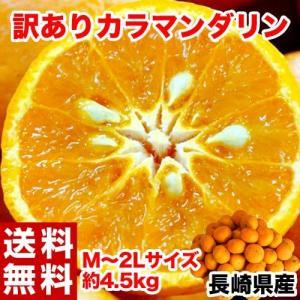 超濃厚柑橘「カラマンダリン」が豊洲市場に大量入荷!  しかも訳あり品につき、買い手が見つからずセリ人...