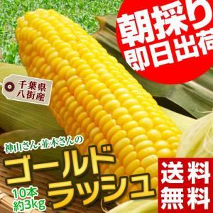 千葉県八街産 神山さん・並木さんのとうもろこし「ゴールドラッシュ」10本 約3kg ※冷蔵|tsukijiichiba