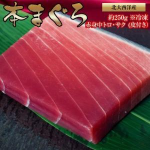 北大西洋産『本まぐろ』赤身中トロ・サク (皮付き)約250g ※冷凍|tsukijiichiba