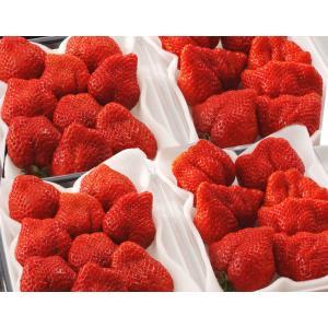 いちご イチゴ あまおう 福岡県産 あまおういちご G 約270g×4パック ※冷蔵・送料無料 tsukijiichiba