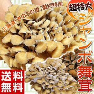 《送料無料》 北海道・愛別産 超特大『舞茸』 約1kg(500g以上×2株) ※冷蔵|tsukijiichiba