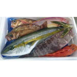 対馬で水揚げされた鮮魚介類をセットにしてお届けします。  早朝、漁師さんより水揚げされた魚介類のみを...