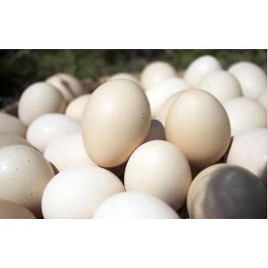 豊富な栄養素を持つ 大分県産 おおいた烏骨鶏の卵2パック