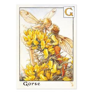 フラワーフェアリーズ   ポストカード<Gorse Fairy>FF-026|tuliphouse