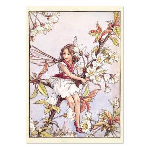 フラワーフェアリーズ   ポストカード<The Wild Cherry Blossom Fairy>FF-143|tuliphouse