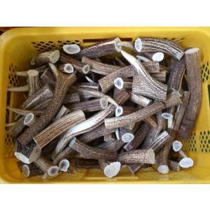 送料無料 鹿の角天然素材 北海道の蝦夷鹿の角  角の胴部分のカット品 1キロ 水・海難厄除のお守り ナイフ材等に|turidaisuki
