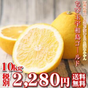 (fちびゴ 10)ちび玉宇和島ゴールド 10kg  (葉傷・...