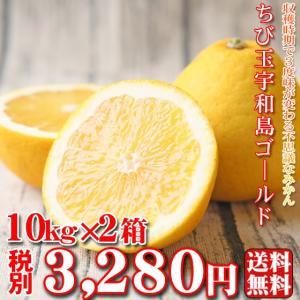 (fちびゴ 1002)ちび玉宇和島ゴールド 10kg×2箱 ...