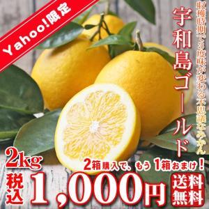 【fゴ 02】宇和島ゴールド 2kg ※2箱購入でもう1箱お...