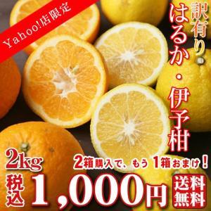 【haruiyo 02】【Yahoo!店限定】 訳有り はるか ・ 伊予柑 2kg(大小サイズ込・葉傷枝傷等がございます)2箱購入でもう1箱おまけ!【基本送料無料】