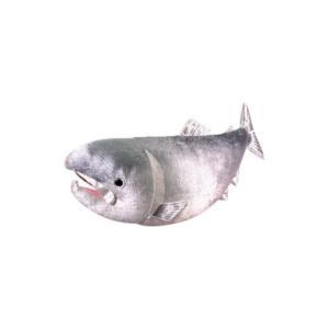 オスト:ブルブルおさかな 鮭/8202-292|tvc