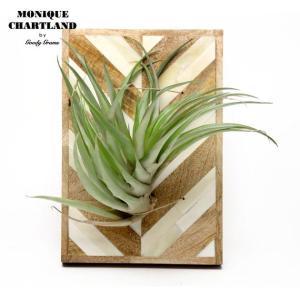 エアプランツ ホルダー おしゃれ 観葉植物 Goody Grams AIR PLANTS HOLDER L|tycoon