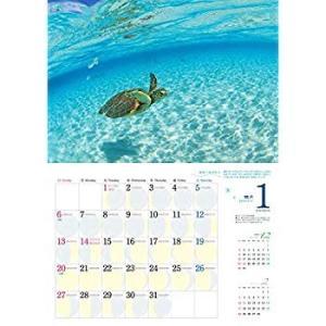 2019うみまーる大判ムーンカレンダー `海と空の出会う場所−OKINAWA' (月の満ち欠け)|tywith2