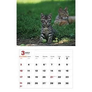 2019猫カレンダー のら (カレンダー)|tywith2