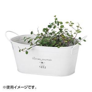 ブリキプランター 10-08おしゃれ ガーデニング 鉢植え|ulmax