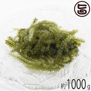 純沖縄産 A品 朝摘み 生海ぶどう オジーの夢 1000g ...