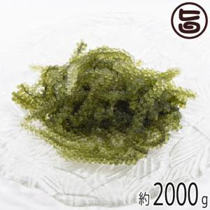純沖縄産 A品 朝摘み 生海ぶどう オジーの夢 2000g ...