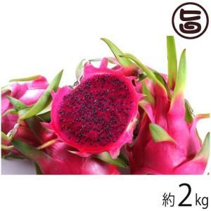 家庭用 沖縄産 ピタヤ レッドドラゴンフルーツ 約2kg 沖縄 フルーツ お土産  送料無料