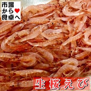 生 桜えび (冷凍)500g【生食用 】刺身・寿司・丼にお使いいただけます。|umaimono18