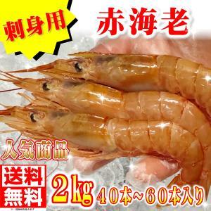 赤 えび 2kg 40本〜60本入り【ボタン海老にも負けない甘さです】刺身用|umaimono18