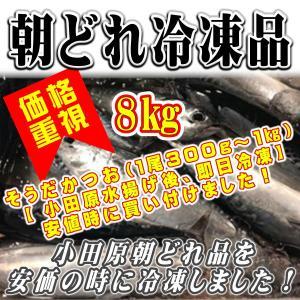 そうだ かつお 8kg (1尾 300g〜1kg)【小田原水揚げ後、即日冷凍】安値時に買い付けました!|umaimono18