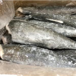 銀鱈 10kg 業務用センターカット【脂のってます】煮付けが最高にうまい。|umaimono18