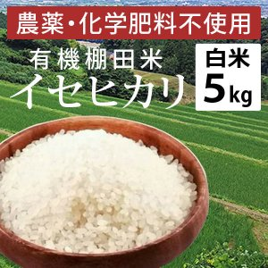 土遊野 有機棚田米 イセヒカリ(白米・5kg)令和2年産|umaimura