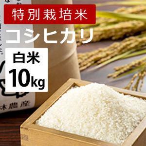 林農産 特別栽培米コシヒカリ(白米・10kg)令和2年度|umaimura