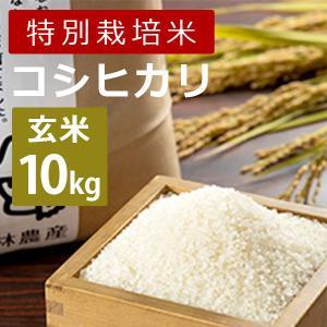 林農産 特別栽培米コシヒカリ(玄米・10kg)令和2年度|umaimura