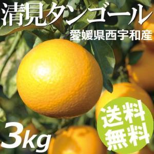 清見タンゴール 3kg 10〜20玉 愛媛県西宇和産 送料無料 贈答品 お取り寄せ|umakore