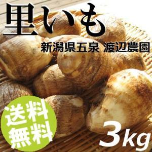 里芋 3kg LL〜L玉 里いも さといも 新潟県 五泉市 渡辺農園 送料無料 お歳暮 贈答品 お取り寄せ|umakore