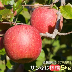 リンゴ りんご 林檎 サンふじ ふじ フジ 産直 ご家庭用 信州小布施産 サンふじ林檎5kg 送料無料 減農薬栽培 蜜 発送は12月20日頃まで。|umakou