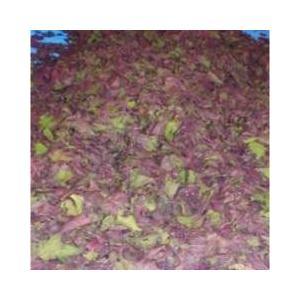 しそ 紫蘇 国産もみしそ 1kg 単品販売はいたしません。 ※完熟梅との同梱購入のみ (送料はかかりません)