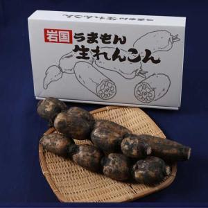 岩国生れんこん(堆肥栽培)2kg|umamon