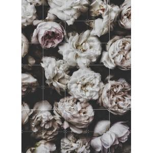 IXXI Peony Roses - small [80*100]|umd-tsutayabooks