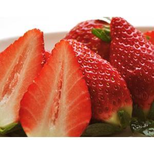 いちご イチゴ 果物 苺 千葉県産 アイベリー 12〜15粒 約500g フルーツ 国産 ギフト 贈り物 プレゼント 贈答 お取り寄せ お礼 お返し 冷蔵|umeebeccyasannriku|02