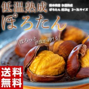 栗 くり クリ 熊本県産 低温熟成 ぽろたん 2L〜3L 約2kg 送料無料 ※冷蔵