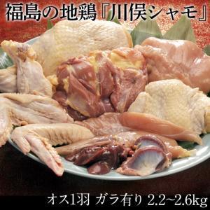 福島県 川俣シャモ バラシ1羽 オス(内臓付き・ガラ付き) 2.3キロ以上 ギフト 冷蔵 ふくしまプライド。体感キャンペーン(お肉)|umeebeccyasannriku