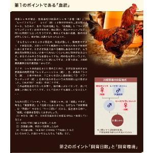 地鶏 川俣シャモ バラシ半羽 オス 700g以上 福島県 ギフト 冷蔵 ふくしまプライド。体感キャンペーン(お肉)|umeebeccyasannriku|04