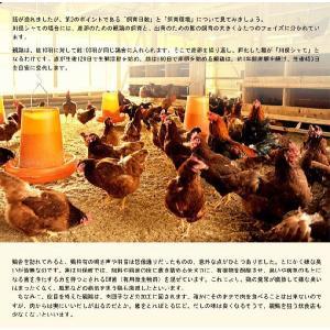 地鶏 川俣シャモ バラシ半羽 オス 700g以上 福島県 ギフト 冷蔵 ふくしまプライド。体感キャンペーン(お肉)|umeebeccyasannriku|05