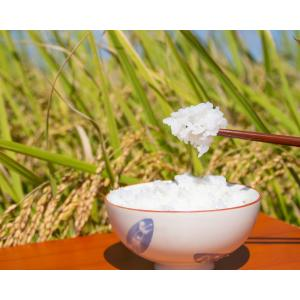 新潟県産 令和元年度 新米 「葉月みのり」新品種 白米 5kg 常温|umeebeccyasannriku