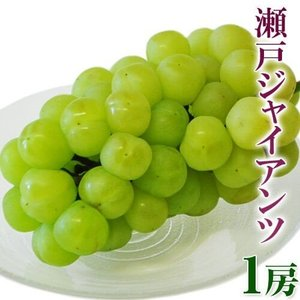 ぶどう 葡萄 ブドウ 岡山産 瀬戸ジャイアンツ 大房1房 約600g 送料無料 umeebeccyasannriku
