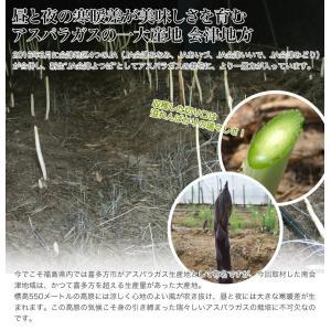 アスパラ アスパラガス(グリーン)  Lサイズ 約600g 福島・会津産/送料無料|umeebeccyasannriku|02