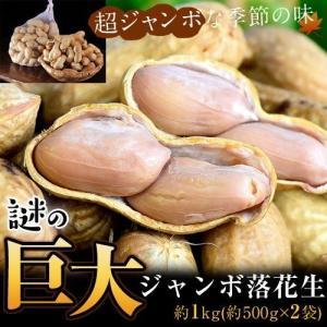 千葉県成田産 高梨さんの 謎の巨大ジャンボ落花生 約1kg(約500g×2袋) 冷蔵 産地直送