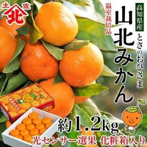 お中元 御中元 みかん 詰め合わせ 果物 とさのおひさま『山北みかん』ハウス栽培 高知産 化粧箱入り 約1.2kg