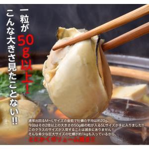 かき カキ 牡蠣 年末 鍋 超巨大5Lサイズ 伊達 釜茹で牡蠣 約1kg(解凍後850g)18粒前後 冷凍|umeebeccyasannriku|02