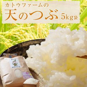 米 福島県産 精米 カトウファーム 天のつぶ 5kg|umeebeccyasannriku