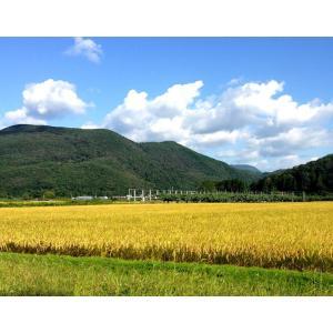 平成29年度 福島県産新米 カトウファームの「 天のつぶ」5kg(精米)※常温|umeebeccyasannriku|05