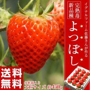 その美味しさは星四つをつけたくなるほど!新品種イチゴ「よつぼし」  2017年2月に品種登録されたば...
